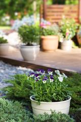 Summer garden patio