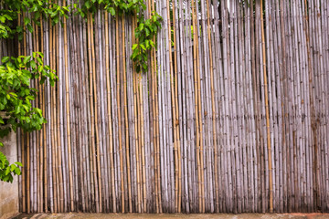 bamboo fence at natural resouce