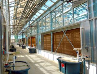 Greenhouse, plants,ecosystem.