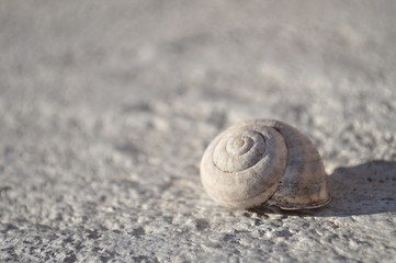 Detail view of snail shell