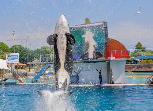 Foto op Canvas Dolfijn spectacle orques