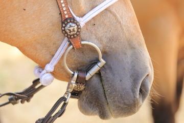 rendini particolare attacco al cavallo