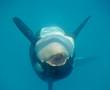 orque en spectacle