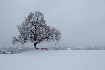 Tree and Wetzikon on a winter day, snowfall