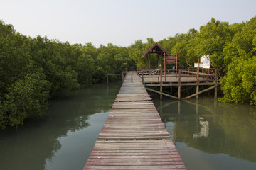 Boardwalk in the mangrove forest