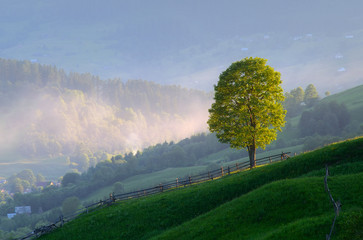 Lonely tree in a mountain village