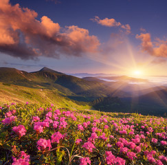 Summer flowers in the mountains