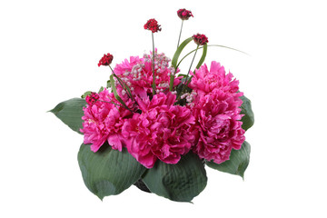 bouquet of pink peonies and leaves hosts isolated on white