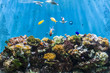 seabed with fish and coral reef