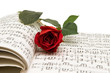 Rose and notes - 66584733