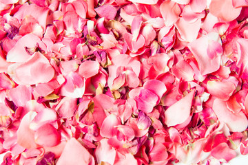 Pink rose petals scattered as a background