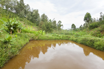 Kenyan Fish Pond