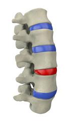 Colonna vertebrale midollo