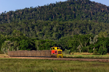 Train carries sugar cane from field to refinery