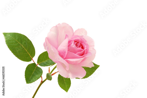 Aluminium Rozen Rose