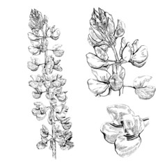 Detailed Hand Drawn Flowers - for scrapbook and design.