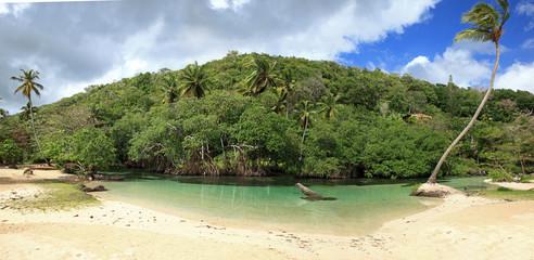 panorama sur mangrove de la côte de république dominicaine