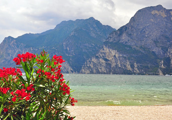 Flowers, mountains and lake