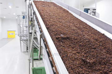 raisins in raisin production factory packaging