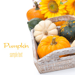 Assorted pumpkins in a wooden tray, isolated on white