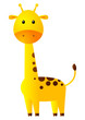 Funny giraffe isolated on white
