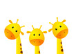 Funny giraffes on white background