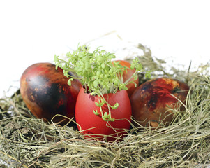 Easter eggs with garden cress