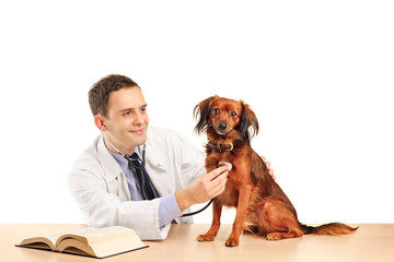 Veterinarian examining a dog with stethoscope