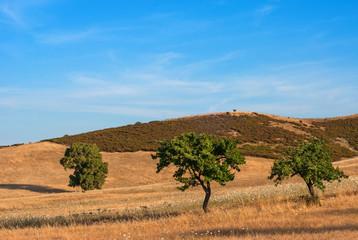 Sardegna, paesaggio di campagna vicino Cagliari