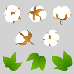 Set of cotton plant elements. Cotton bolls and leaves