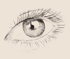 the Eye (new look) vintage illustration, engraved retro style