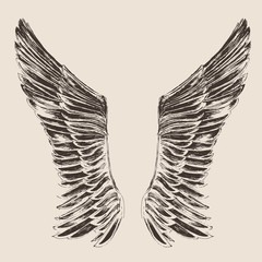 angel wings illustration, engraved style, hand drawn,