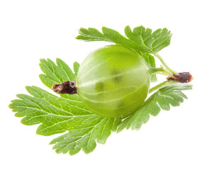 Green gooseberry with leaf isolated on white