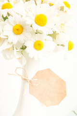 Floral background with daisies.