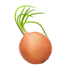 brown onion with green shoots source of vitamins