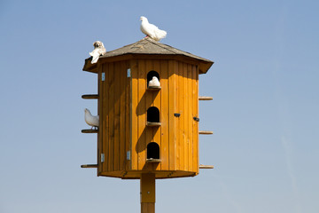 White pigeons sitting on a dovecote