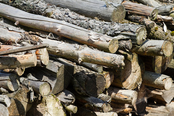 Piled dry wood