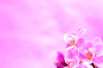 Orchideen auf dem rosanem Hintergrund