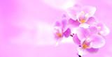 Rosa Hintergrund mit Orchideen
