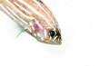 Pesce acquario