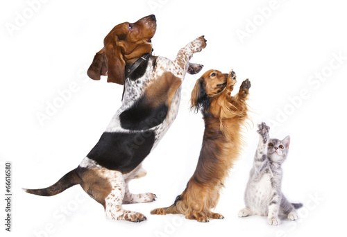Papiers peints Perroquets group of dog standing on hind legs