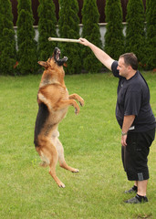 Shepherd breed dog jumping up for a stick with a host