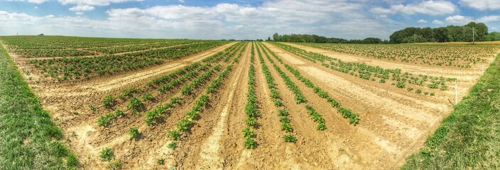 Agrarwirtschaft Panorama