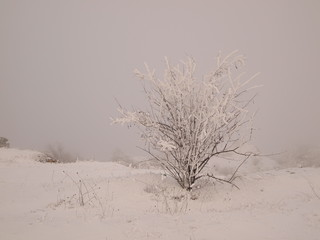 Tree in winter time