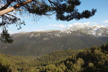 Landscape with snow mountain and pine forest