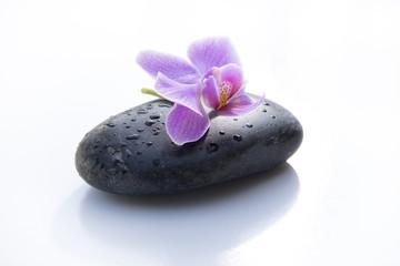 galet noir orchidée
