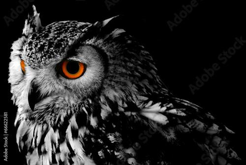 Zdjęcia na płótnie, fototapety na wymiar, obrazy na ścianę : Bengali Eagle Owl (Bubo bengalensis)