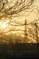 Suggestive View of the Eiffel Tower through Branches at Sunset