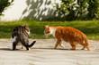 2 Katzen drohen