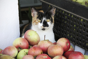 cat selling apples